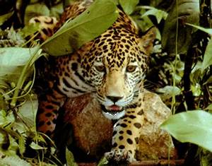 plants and animals in the rainforest