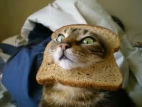 can cats eat bread cat in bread search cat in bread