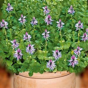 Verpiss Dich Pflanze : verpiss dich pflanze blumen und pflanzen einebinsenweisheit ~ Orissabook.com Haus und Dekorationen