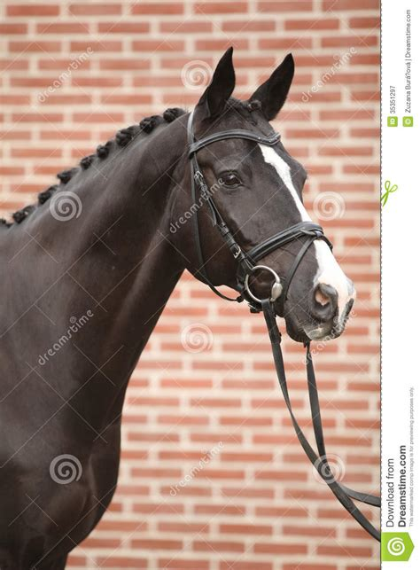 nice big horse  perfect hair style stock image image