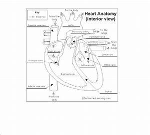 Miss Jeffrey U0026 39 S Sbi3c  Study Guide Answers