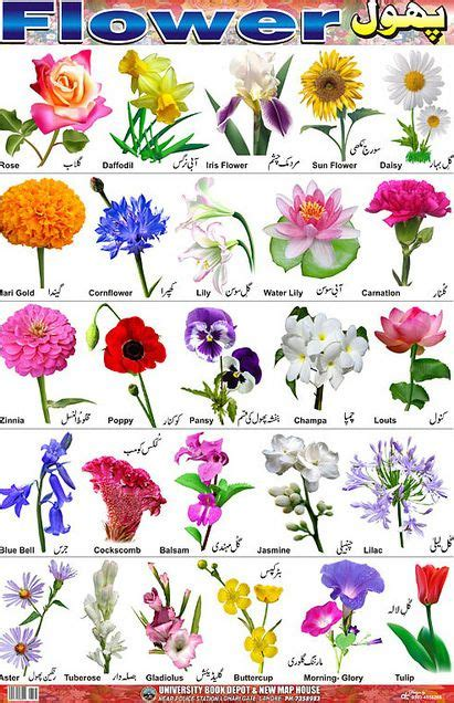 66 best images about bulbs and pruning on