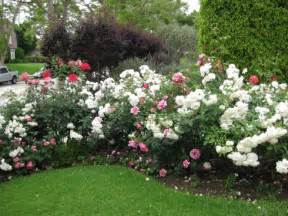 pictures of flower beds photos design for garden flower