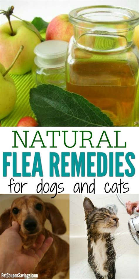 natural flea remedies  dogs  cats pet coupon