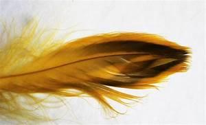Fly Tying Feathers Mallard Hen