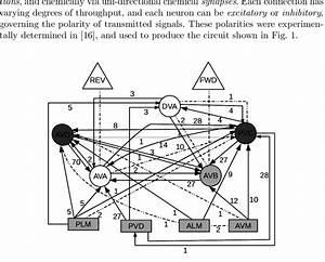 Tap Withdrawal Circuit Of C  Elegans  Rectangle  Sensory