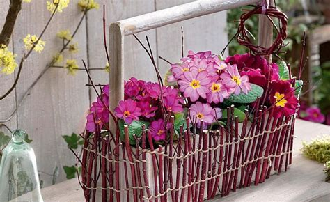 roter hartriegel schneiden fr 252 hlingsdeko mit primeln floriculture flowers sweet home und floral