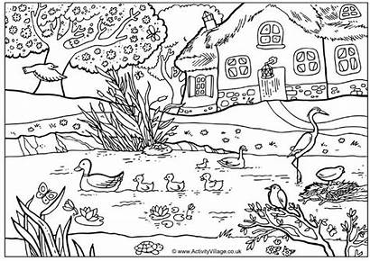 Coloring Pages Spring Ducks Pond Colouring Adult