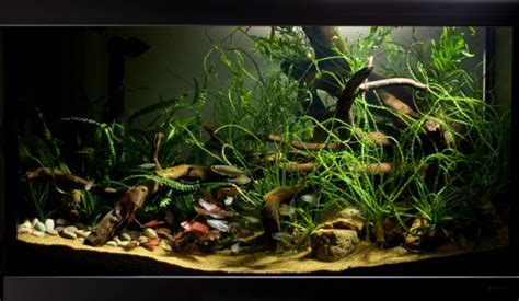 How to set up an African biotope aquarium - Practical