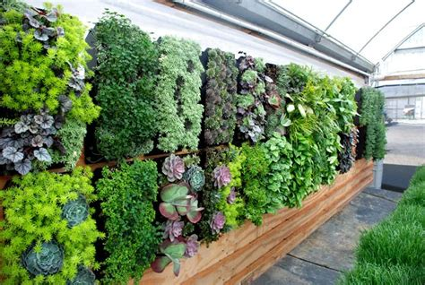 Vertical Gardens Inspiration-luscious Living Spaces