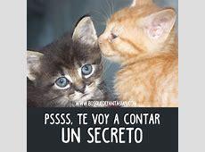 IMÁGENES DE GATOS ® Fotos de gatitos lindos【101 Fotos】