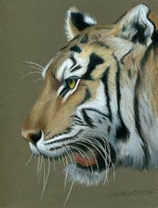 Tiger Colored Pencil Drawings of Animals