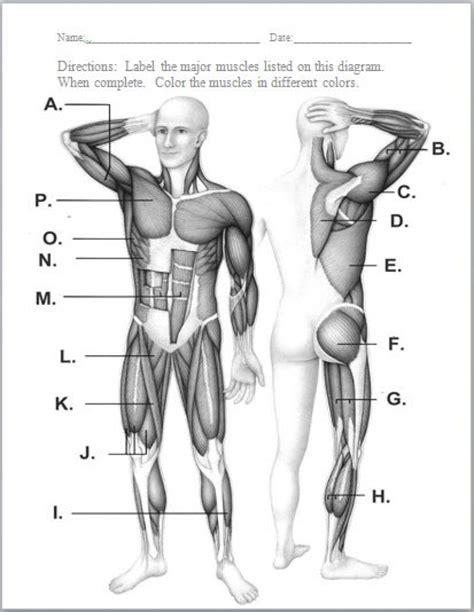 Muscular System Diagram Worksheet Craftbrewswaginfo
