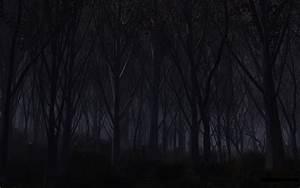 49, Dark, Scary, Forest, Wallpaper, On, Wallpapersafari