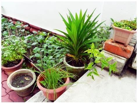 starting a veggie patch start a vegetable garden veggie patch raised bed garden container garden how to start a