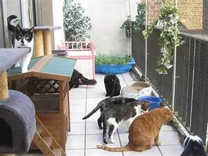 rasen auf balkon fr katze rasenmagie mein balkon wird zur With französischer balkon mit gegen katzen im garten