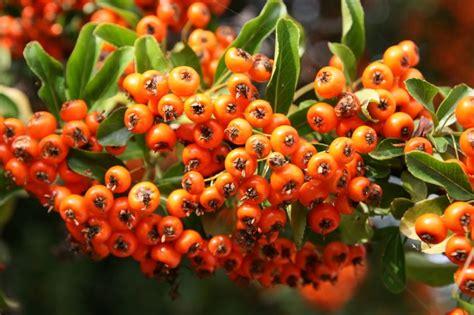 Abnehmen orangen