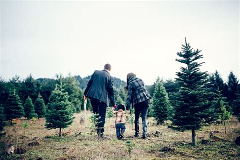 top tree farms in seattle area in seattle lights events festivals