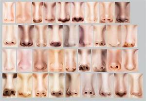 Sniffing Out Nose Shapes  The 12 Most Common Nose Types