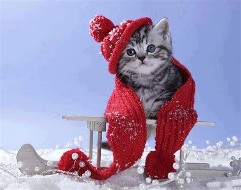 [36+] Winter Kitten Wallpaper on WallpaperSafari