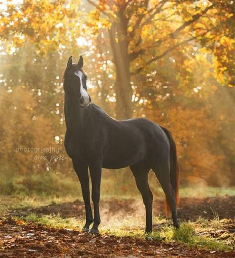Most Expensive Horse Ever Sold