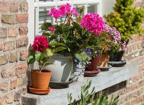 piante da davanzale gerani vivi su un davanzale fotografia stock