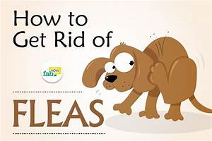 How To Get Rid Of Fleas On Dogs Fast