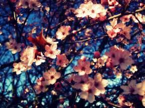 flowers-tumblr - Flowers Photo (33623929) - Fanpop