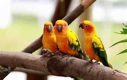 Birds Wallpapers Desktop Backgrounds