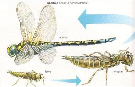 metamorphose de la larve de libellule 201 cologie pinterest