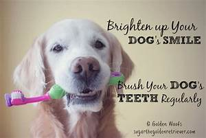 brighten up your dogs smile