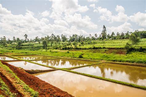farm africa expands fish farming  kenya latest news