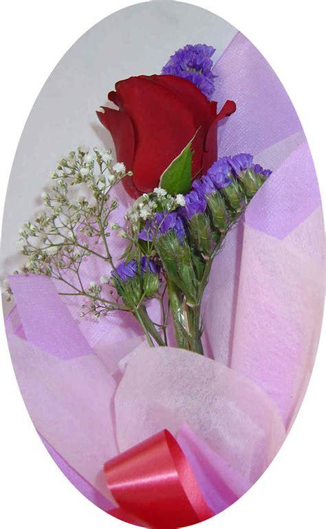 gambar bunga mawar  kata romantis gambar