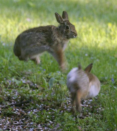 hopping bunny bunny hop