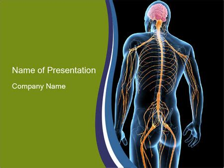 nervous system powerpoint template backgrounds id 0000090609 smiletemplates