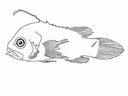 Coloring Fish Strange