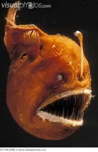 Deep Sea Angler Fish