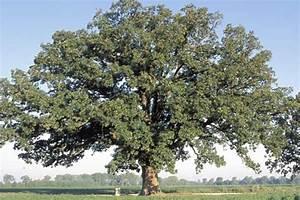 Tree  Shrub  And Vine Facts
