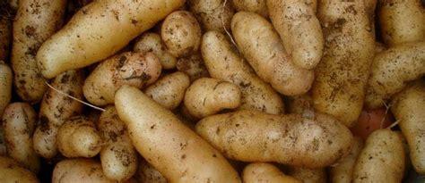 cuisiner saucisse morteau recettes de pomme de terre idées de recettes à base de
