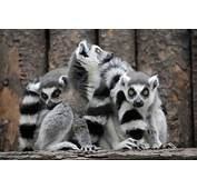 Pictures Of Zoo Animals  Funny Gallery