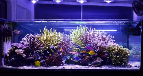 Led Lights For Reef Tank by Orphek Led Emitter