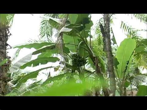 region pacifica de colombia youtube