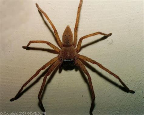 Keep Spiders Out Of Boat by What S One Fear You T Been Able To Overcome As You