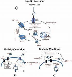 Diagrammatic Representation Of Pathophysiology In Type 2