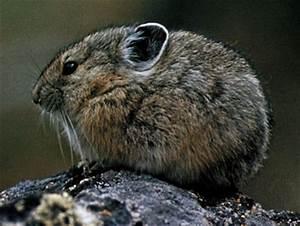 Long legged rodents