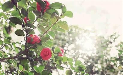 Cinemagraphs Trees Motion Through Creativity Garden Tree