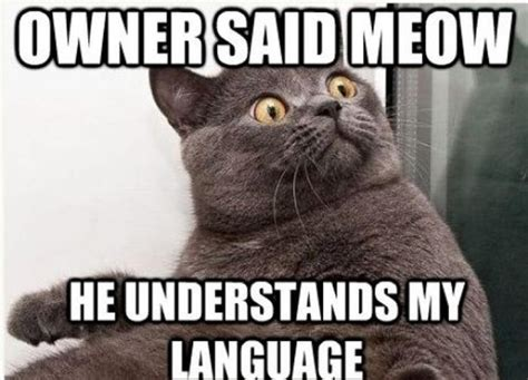 Cat Meow Meme - owner said meow