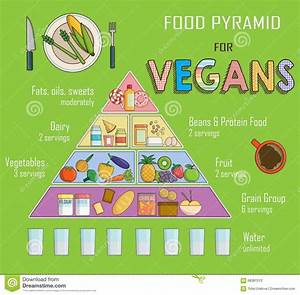 Infographic Chart  Illustration Of Food Pyramind For