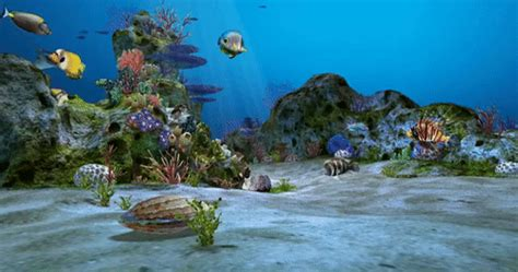 Animated Aquarium Wallpaper Gif - aquarium fish wallpaper gif reviewwalls co