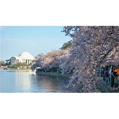 High-Resolution Images - National Cherry Blossom Festival